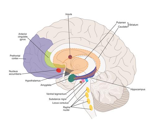 limbic2