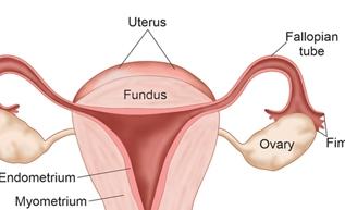 Uterus and Ovary